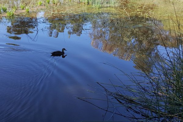Doneraile Constructed Wetland Update