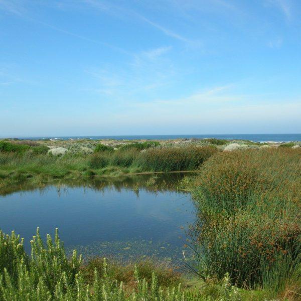 King Island Currie - Treatment Wetland