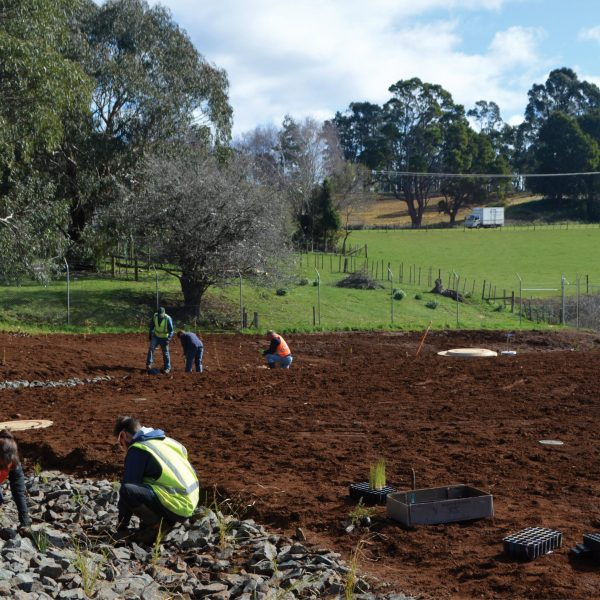 Syrinx Environmental - Projects - Burnie - Community Planting