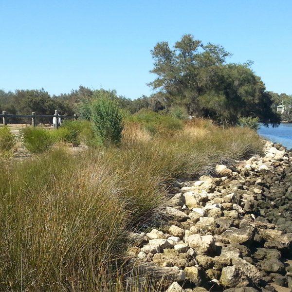Syrinx Environmental - Projects - Garvey Park - Foreshore Restoration