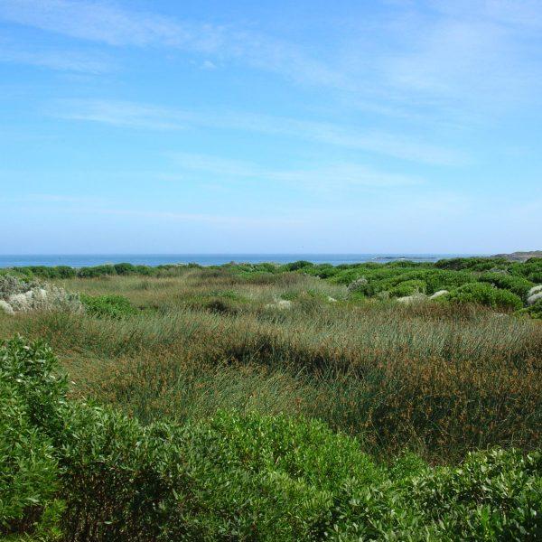 King Island Currie - Surface Flow Polishing Wetland