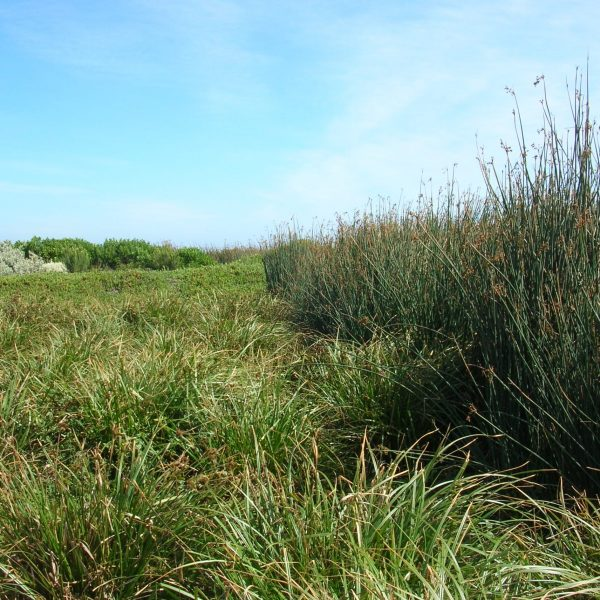 King Island Currie - Subsurface Flow Treatment Wetland