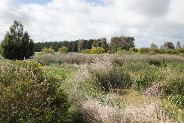 Syrinx Environmental - Projects - Lake Bolac